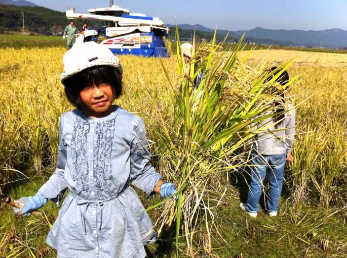 稲刈り祭りの様子