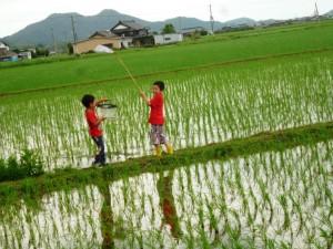 田んぼで遊ぶ2