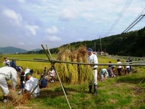 稲刈り祭り2