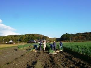 ネギ収穫サブ1
