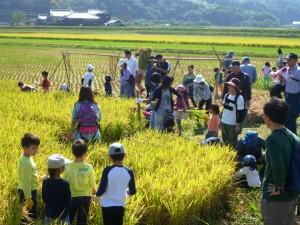 稲刈り祭り2014-2