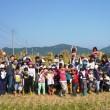 稲刈り祭り