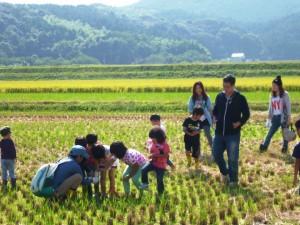 稲刈り祭り2014-3