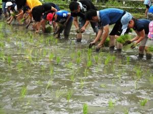 2015田植え祭り1