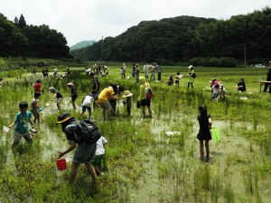 2015田植え祭り3