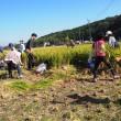 稲刈り祭りを開催しました!