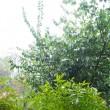 雨/稲刈り祭りのご案内